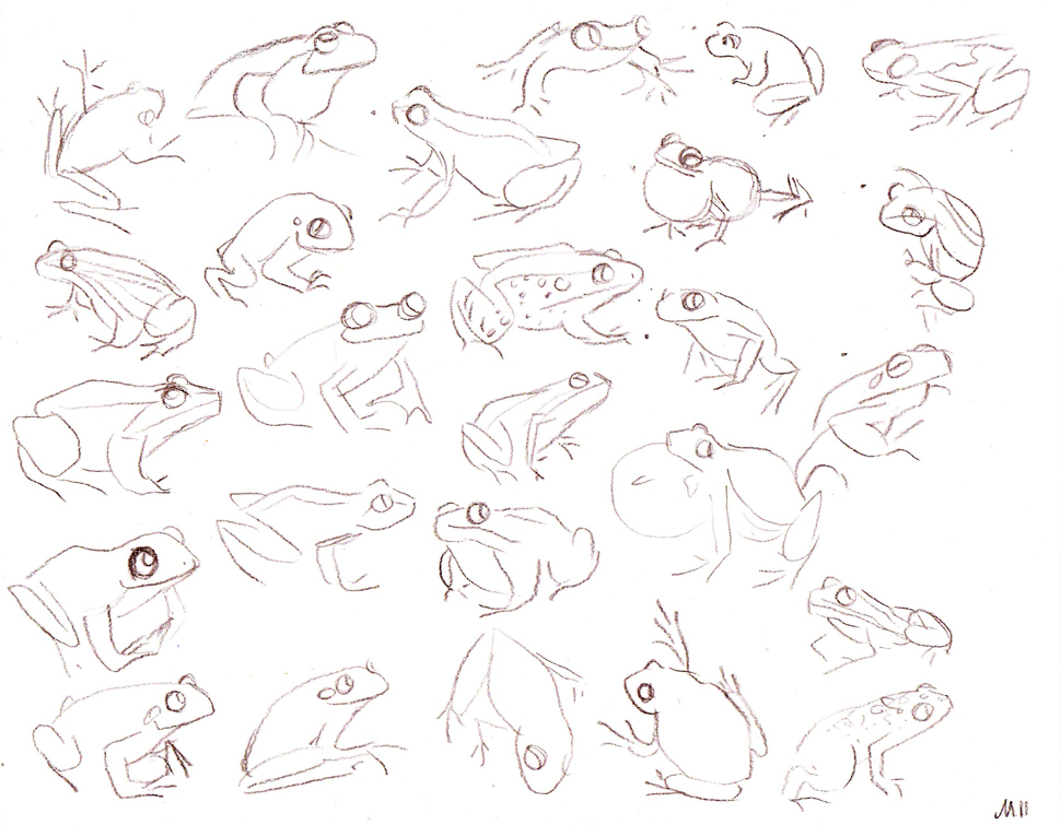Frog Sketch Drawing Working on Some 3d